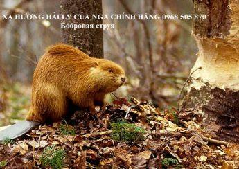 xa huong hai ly cua nga chinh hang